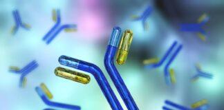 Bifidobacterium bifidum promotes immune tolerance in the gut