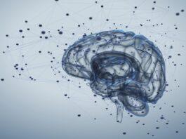 Brain, autism and microbiota